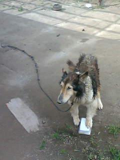 あさっては我が家の犬と散歩しようと思っています。