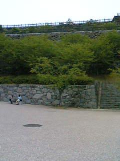 舞鶴城の葉桜