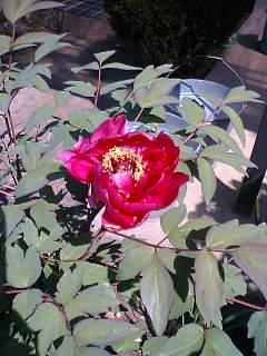 我が家の庭でとった花です。