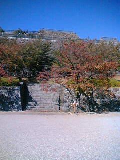 甲府の城の木々の葉が色づいてきました。
