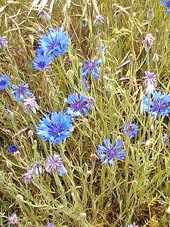 野に咲く花も美しい。