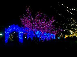 甲府城の「光のピュシス(回廊)」
