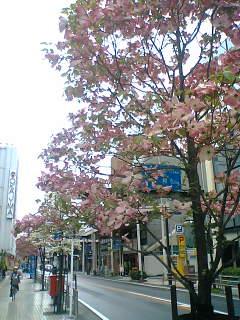 街路の花もいいですね。