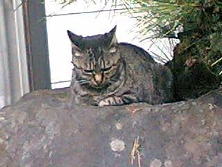 我が家の猫が行方不明です。